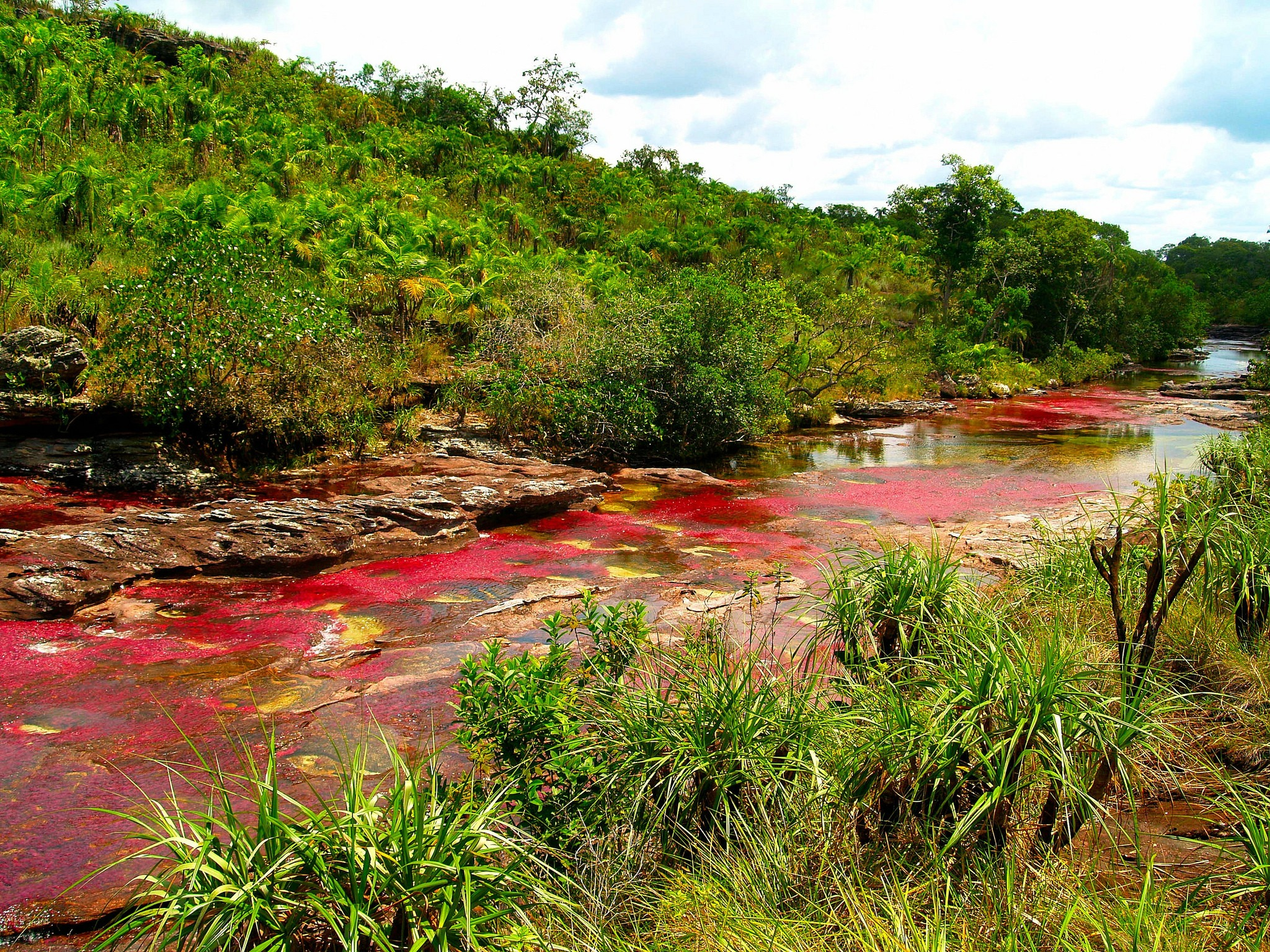 Cano Cristales The River Of Seven Colors moreover House Plant together with 8000376430 in addition Eelectriccity together with 0 电鳗. on electric eel